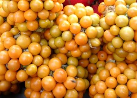 inflated: Goldenberry, gooseberry-tomato, Peruvian-groundcherry, Physalis peruviana, cultivated herb with golden yellow tomato-like fruits enclosed in inflated calyx, eaten raw    Stock Photo