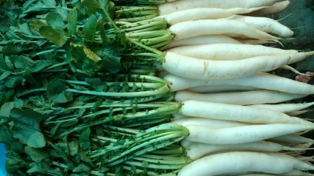 cm: Daikon, White radish, mooli, Raphanus sativus, root vegetable with long lobed leaves and white fleshy root up to 40 cm long, used as salad, cooked as vegetable
