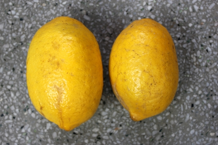 the oblong: Galgal, Hill lemon, Citrus pseudolimon, Rutaceae, fruit grown in NW India with oblong fruits finally turning yellow with with white pulp, highly acidic, used as pickle  Stock Photo