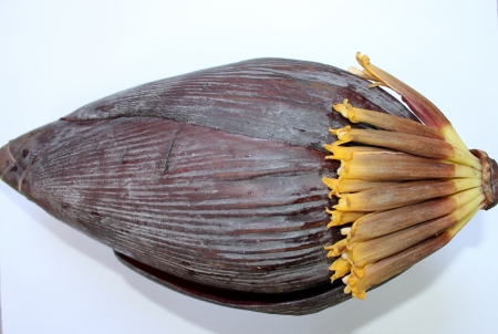bracts large: Banana male inflorescence, plantain, French plantain, Kela, Musa x paradisiaca, red terminal inflorescence with large fleshy red bracts enclosing two rowed flowers is cooked as a vegetable   Stock Photo