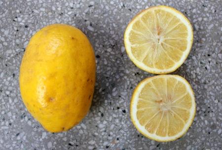 rutaceae: Citrus pseudolimon