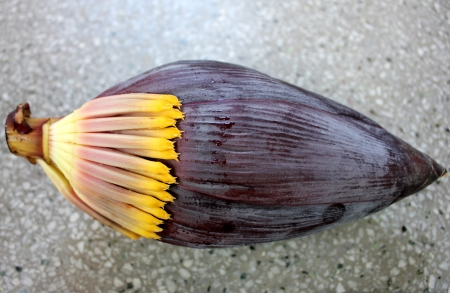 inflorescence: Banana male inflorescence as vegetable    Stock Photo