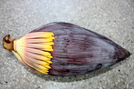 fleshy: Banana male inflorescence, plantain, French plantain, Kela, Musa x paradisiaca, red terminal inflorescence with large fleshy red bracts enclosing two rowed flowers is cooked as a vegetable   Stock Photo