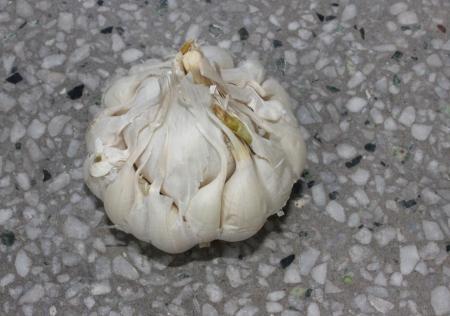 alliaceae: artichoke garli