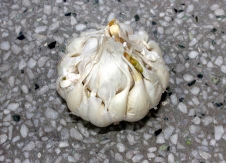 alliaceae: artichoke garlic