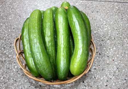cucumis sativus: Persian cucumber, Cucumis sativus, burpless thin skinned cucumber with bumpy skin, consumed without removing skin