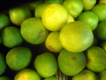 rutaceae: Mosambi, lima dulce, Citrus limetta, Rutaceae, c�tricos se tornan amarillas cuando maduran con pulpa de color amarillo claro dulce, que se cultiva com�nmente en la India Foto de archivo