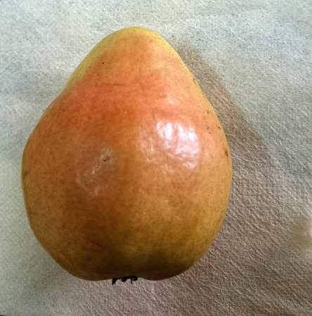 pyrus: Comice pear, Pyrus communis, sweet juicy pear with greenish yellow fruit with red blush and short neck  Stock Photo