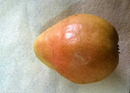 greenish: Comice pear, Pyrus communis, sweet juicy pear with greenish yellow fruit with red blush and short neck  Stock Photo