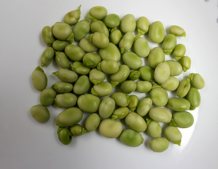 fava bean: Broad bean, faba bean, fava bean, Vicia faba, Cultivated herb with pinnate leaves, creamish-white flowers and few-seeded pods, young pods and young seeds used as vegetable, mature seeds as pulse