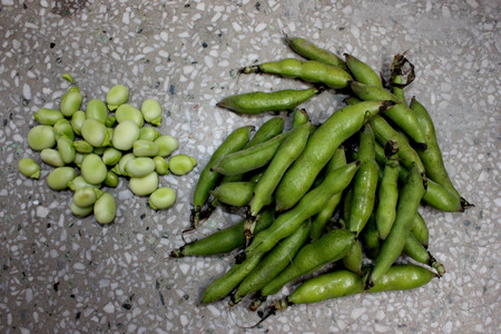 Broad bean, faba bean, fava bean, Vicia faba, Cultivated herb with pinnate leaves, creamish-white flowers and few-seeded pods, young pods and young seeds used as vegetable, mature seeds as pulse
