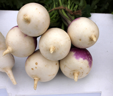 tuberous: Turnip, purple top white globe turnip, white turnip, Brassica rapa subsp  rapa, winter vegetable with tuberous globose root, purple in upper part, having white flesh  Cooked as vegetable