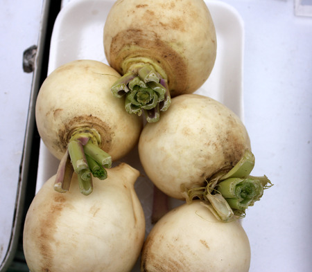 globular: Turnip, Pusa Chandrima turnip, Brassica rapa, An early maturing variety shown in plains of India from October to December, globular to slightly elongated, smooth, pure white skin with fine grains, flesh sweet and tender, leaves less lobed, maturing in 50-