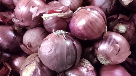 allium cepa: Red onion, Allium cepa, bulbous plant with bulbs having red outer skin, vegetable, salad , raw and cooked