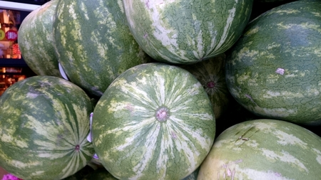 cucurbitaceae:  Seedless watermelon, Citrullus lanatus, large sized fruit without seeds, flesh red, sweet and delicious, refreshing, Cucurbitaceae