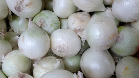 allium cepa: White onion, Allium cepa, bulbous plant with bulbs having white outer skin, vegetable, salad , raw and cooked