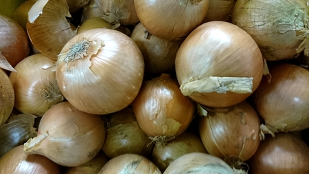 allium cepa: Yellow onion, Allium cepa, bulbous plant with bulbs having yellow outer skin, vegetable, salad , raw and cooked Stock Photo