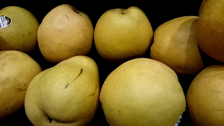 globose fruits: Yellow Asian pear, Pyrus pyrifolia, Asian cultivar with yellowish-brown globose fruits, usually large in size with aromatic grainy flesh, often eaten peeled