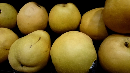 pyrus: Yellow Asian pear, Pyrus pyrifolia, nealy globose yellowish brown fruit with dots, flesh sweet, grainy, mostly eaten peeled