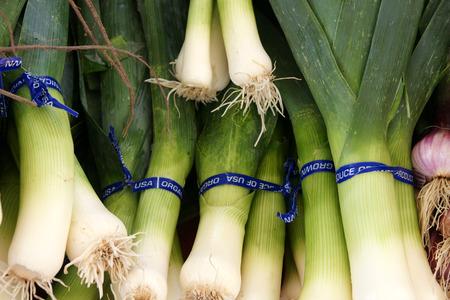 umbel: Leek, Allium porrum, Allium ampeloprasum, bulbous plant with linear slightly keeled leaves and white flowers in a globose umbel with long beaked spathe, vegetable, salads