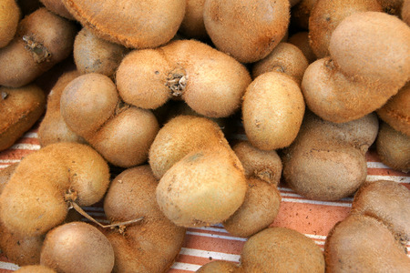 actinidia deliciosa: Heart-shaped Kiwi fruit, Chinese gooseberry, Actinidia chinensis var deliciosa, Actinidia deliciosa, tree with brown fruits with brown hairy surface and light greenish flesh and black seeds and whitish column, table fruit Stock Photo