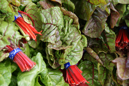fleshy:  Red Ruby Chard, Beta vulgaris var cicla  Red Ruby , Vegetable crop with red fleshy petioles and large green leaves with red veins