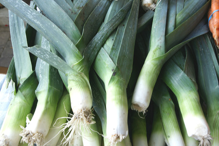 globose: Leek, Allium porrum, Allium ampeloprasum, bulbous plant with linear slightly keeled leaves and white flowers in a globose umbel with long beaked spathe, vegetable, salads
