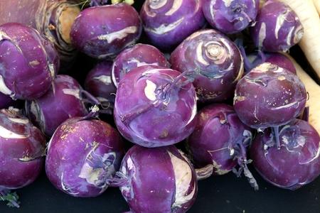 Red Kohlrabi, Red Knol khol, Red German turnip, Brassica oleracea var gongylodes, vegetable crop with globose stem bearing long petioled leaves, cooked as vegetable