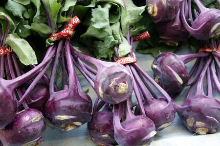 globose: Red Kohlrabi, Red Knol khol, Red German turnip, Brassica oleracea var gongylodes, vegetable crop with globose stem bearing long petioled leaves, cooked as vegetable