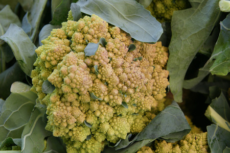 carotene: Romanesco cauliflower, Romanesco broccoli, taxonomists not sure about its being Brassica oleracea var  botrytis or italica, fractal food with self repeating small cones of greenish yellow colour, cooked as vegetable, rich in beta carotene and minerals Stock Photo