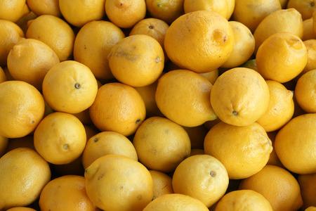 fin d annee: Citron Eureka, Citrus limon, Quatre saisons citron, cultivar commun disponibles tout au long de l'ann�e, les fruits jaunes �corce �paisse, pointue � une extr�mit�, populaire pour les limonades, les salades Banque d'images