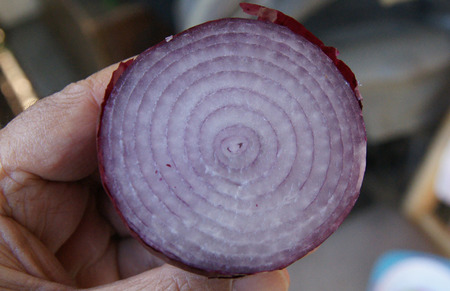 papery: Red Onion, Allium cepa, Bulbs red papery skin and white fleshy layers within, each layer with red skin, used in vegetables, salads and garnishing Stock Photo