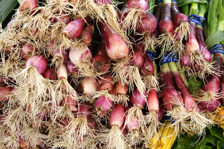papery:  Red spring onion, Allium cepa, young bulbs red papery skin and white fleshy layers within, with long fistulose green leaves above, used in garnishing, stirfries and salads