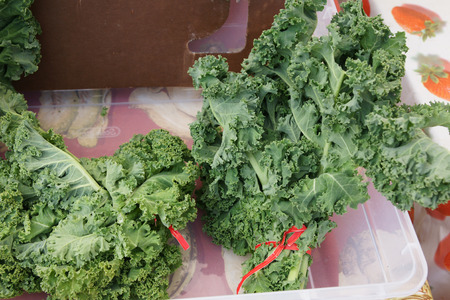 var: Curly kale, Brassica oleracea var  sabellica, formerly var  acephala, a kale cultivar with closely curled deep green leaves, used as vegetable and in salads  Stock Photo