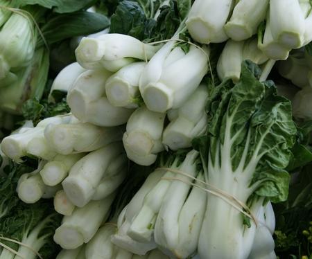 charnu: Blanc bok choi court p�tiole, Brassica rapa subsp chinensis, culture de l�gumes avec de courts p�tioles charnus blancs et lame vert fonc� des feuilles, utilis� comme l�gume Banque d'images