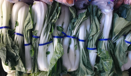 fleshy: White short petiole bok choi, Brassica rapa subsp  chinensis, vegetable crop with short white fleshy petioles and dark green leaf blade, used as vegetable