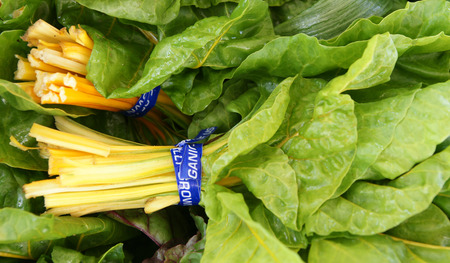 fleshy: Golden Chard, Beta vulgaris var cicla  Golden , Vegetable crop with golden yellow fleshy petioles and large green leaves with yellow veins Stock Photo
