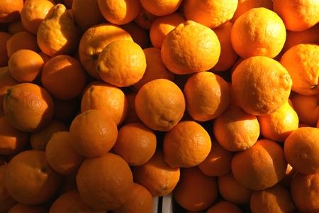citrus reticulata:  Gold Nugget Mandarin, Gold Nugget Tangarine, Citrus reticulata  Gold Nugget
