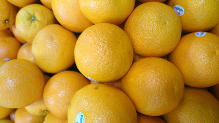 citrus  sinensis: Valencia orange, Citrus sinensis, cultivar developed in California, medium sized fruits with bright orange juice, common in Summer, have few seeds, mostly grown in Florida
