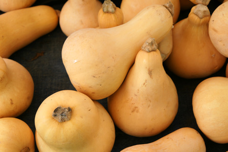 Butternut squash, Butternut pumpkin , Cucurbita moschata, pitcher-shaped fruit with broad base and narrow neck, with light pink skin and orange yellow flesh with sweet nutty taste, cooked as vegetable