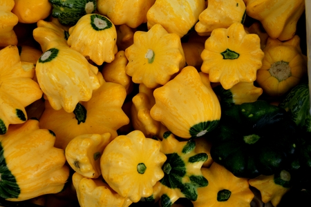 lobed:  Yellow scallopini squash, Cucurbita pepo, summer squash like patty pan but more rounded, and lobed edges, green at attachment end, used as vegetable, stirfried or stuffed Stock Photo