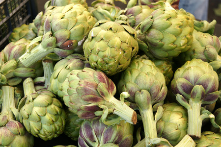 cardunculus scolymus: Globe artichoke vegetable consisting of unopened globose flower heads surrounded  Stock Photo