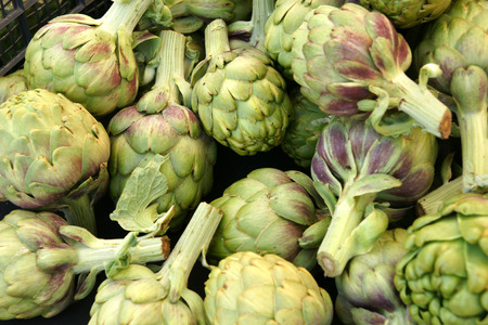 globose: Globe artichoke vegetable consisting of unopened globose flower heads surrounded  Stock Photo