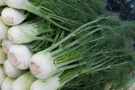 foeniculum vulgare: Foeniculum vulgare var azoricum, a cultiar of fennel with fleshy inflated white leaf