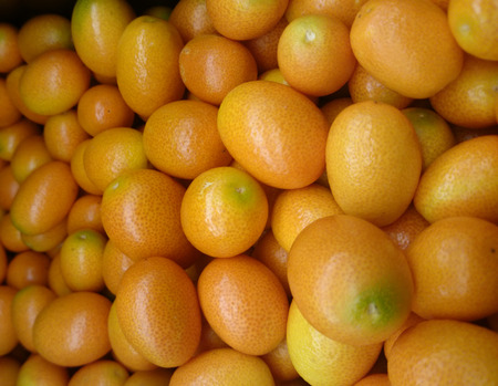 sized: Nagami kumquat, Oval kumquat, Citrus margarita, Fortunella margarita, small oval olive sized fruits often eaten whole producing refreshing flavour, being sweeter on outside, sour inside Stock Photo