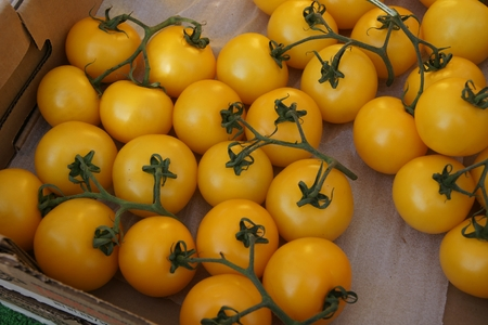 acidity:  Yellow tomato, Solanum lycopersicum, tall cultivar with yellow fruits in bunches, high in beta carotene, minerals, with sweet fruity flavor, lower acidity