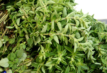 flavouring: Oregano, Origanum vulgare, perennial herb with aromatic opposite and purple flowers in terminal inflorescence, leaves with unique spicy flavors often used as flavouring for dishes especially pizza Stock Photo