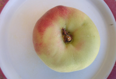 flatter: Saturn peaches, Donut peaches, Prunus persica, Slightly flattened fruit, donut shaped, with yellowish fruit blushed with red, white crisp sweet flesh