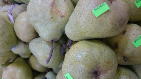 pyrus:  Bartlett pear, William pear, Pyrus communis, European cultivar with typical pear shaped yellow fruits often dotted with darker grey, sweet soft buttery juicy flesh, used raw, canned or in pies