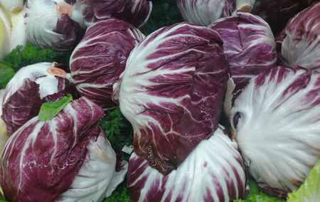 Radicchio, Cichorium intybus,  Italian chicory, a cultivar with red compact leaves with white veins forming cabbage-like head Used as vegetable